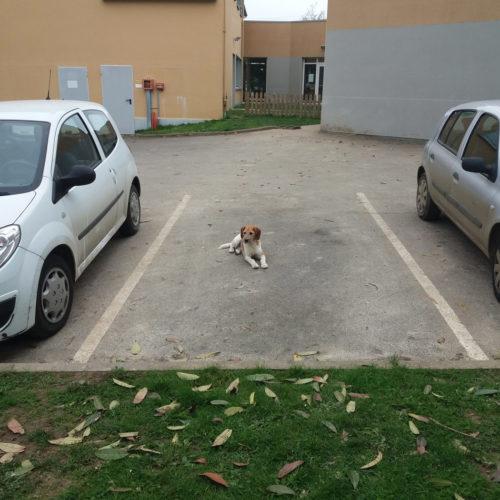 Place de chien ?